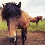 Horse — Stock Photo #38261661