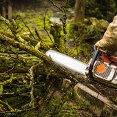 Man sawing a log in his back yard — Stock Photo