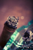 Expensive hand-rolled cigar on a while background — Stock Photo
