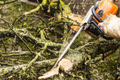 Man sawing a log in his back yard — Стоковое фото