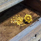 Old sunflower on wooden background — Stock Photo