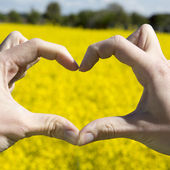 Love shape hands - heart on yellow field and blue sky — Stock Photo