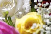 White beautiful rose — Stock Photo