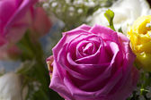 Pink rose and yellow rose — Stock Photo
