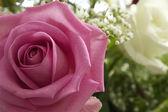 ροζ τριαντάφυλλο closeup φωτογραφία — Φωτογραφία Αρχείου