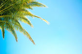 Palm tree blue — Stock Photo
