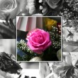 Stock Photo: Rose collage