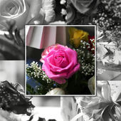 Rose collage — Stock Photo