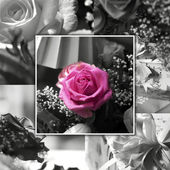 Pink rose collage — Stock Photo