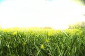 Tráva a květiny — Stock fotografie