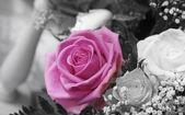 Rose potret — Stock Photo