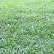 Lawn grass — Stock Photo