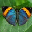Butterfly Resting - Stock Photo
