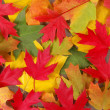 Fall Leaves — Stockfoto #12841152