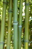 Bamboo zen — Stock Photo