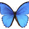 Stock Photo: Butterfly in blue tones