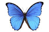 Butterfly in blue tones — Stock Photo