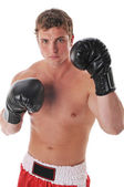 Young boxer — Stock Photo