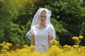 Bride in a flowers field — Stock Photo
