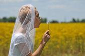 невеста в поле цветов — Стоковое фото