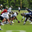 Stock Photo: Saint Louis Rams Football team during practice