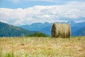 収穫後のフィールドに干し草ベール — Stock fotografie