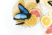 Schmetterlin — Stockfoto
