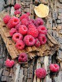 Raspberries on tree bark — Stock Photo