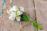 Bouquet of snowdrops — Stock Photo