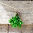Bunch fresh mint — Stock Photo