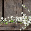 Branch on the wooden background — Stockfoto