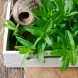 Fresh mint on a wooden background — Stock Photo