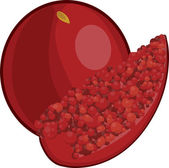 Pomegranate — Stock Vector