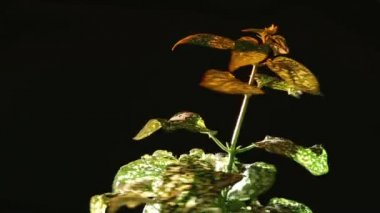 Planta, girar — Vídeo Stock