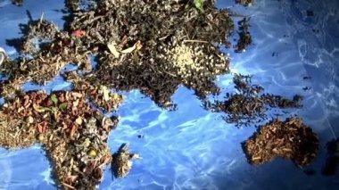 çay dünyası — Stok video