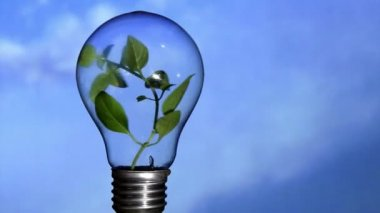 Plant in light bulb, sky — Stock video