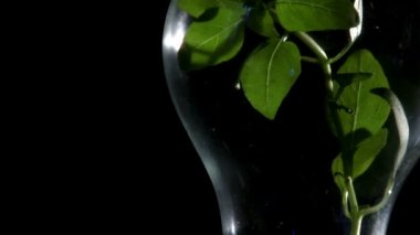 Plant in light bulb, black — Stock Video