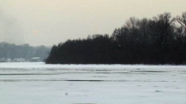 The Danube river frozen — Stock Video