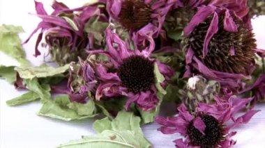 Echinacea dried flowers, tea — Stock Video
