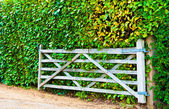 Gateway cottage con sfondo di una siepe — Foto Stock