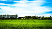 Green field with a cottage in background — Stock Photo