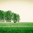 Conceptual image with green filter of a green field with trees in the background — Stock Photo