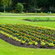 Bedding plants in a flower bed, early summer, UK — Stock Photo #47637729