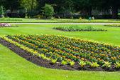 Perkplanten in een bloem bed, begin van de zomer, verenigd koninkrijk — Stockfoto