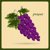 Grapes an illustration in a retro style. — Stock Vector