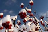 First snow — Foto de Stock
