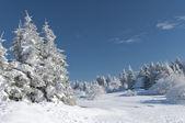 Paesaggio in inverno coperto di neve — Foto Stock