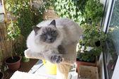 Mooie kat is ontspannend — Stockfoto
