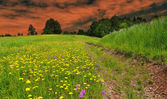 Dusk over the spring meadow — Stock Photo