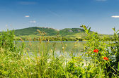 Palava hills, Moravia, Czech Republic, Central Europe — Stock Photo